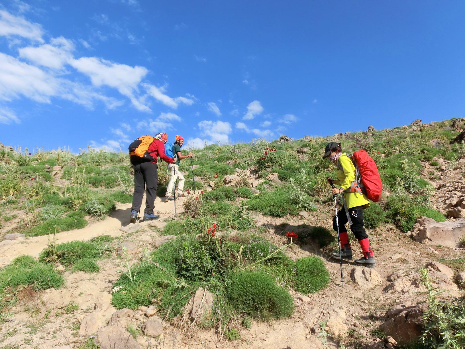 رفیق کوهنورد گلیه از گلهای بهشت