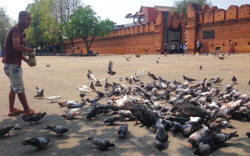 محوطه جلوی Phae Gate جاییه برای جمع شدن آدمها و کبوترها کنار هم. عصر که میشه معمولا گروههای نوازنده اینجا برنامه دارند. Photo by Salar Mousavi | RadioJoloun