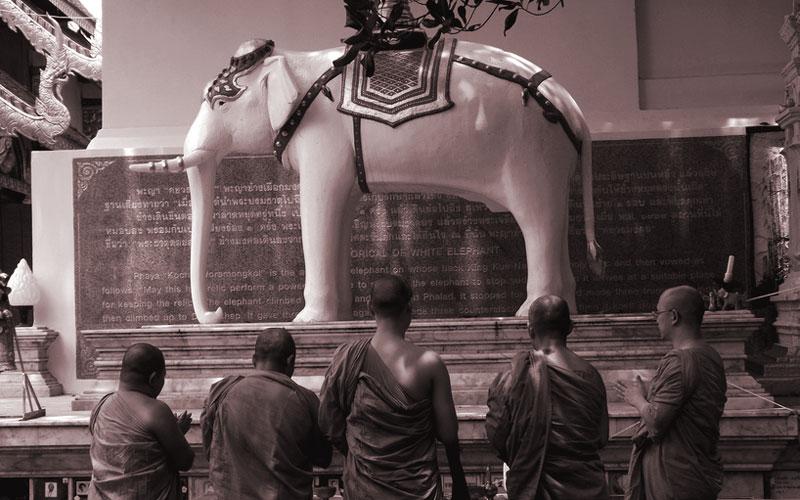 فیل سفید معبد دوی سوتهپ شهر چیانگ مای بسیار برای اهالی تایلند قابل احترامه و مجسمهاش رو خیلی جاها میشه دید