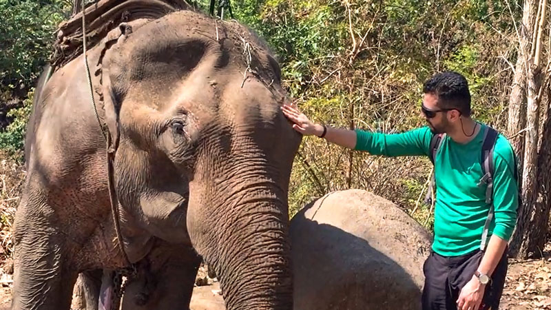 فیل مسنی که ترجیح دادیم باهاش بازی کنیم تا سوارش بشیم.